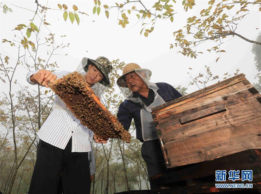 """张家界:大山养蜂人的""""甜蜜""""事业"""